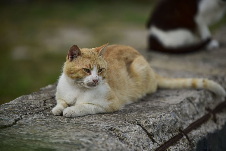 View of a cat resting