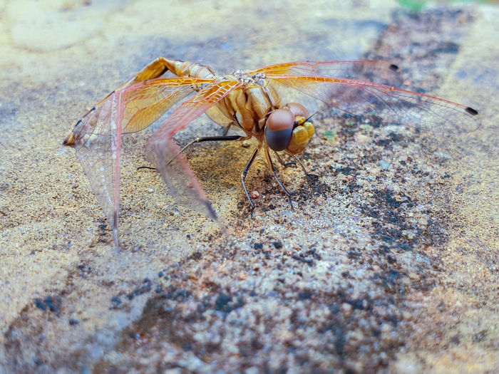 dragonfly that