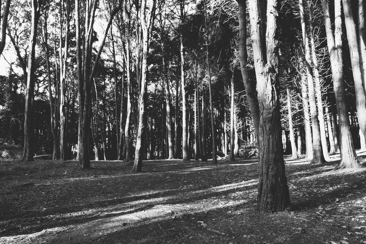 treestreestrees Beauty In Nature Black & White Black And White Blackandwhite Blackandwhite Photography Calm Contrast Day Forest Nature No People Outdoors Silence Silence Of Nature Solitude Tranquility Tree Tree Trunk Trees Trees And Nature