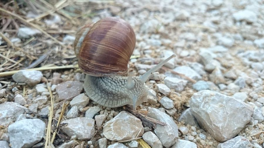 *{Snail | Small World | Nature}*