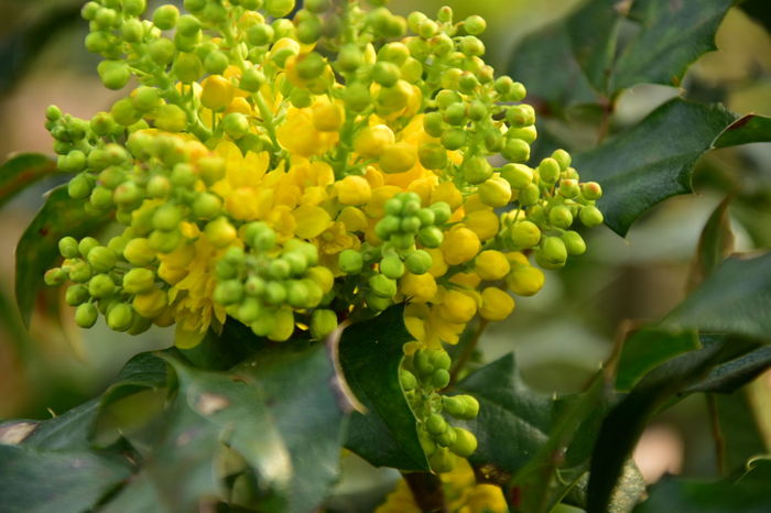 Vine - Plant Plant Part Fruit Agriculture Leaf Multi Colored Biology Social Issues Grape Vegetable