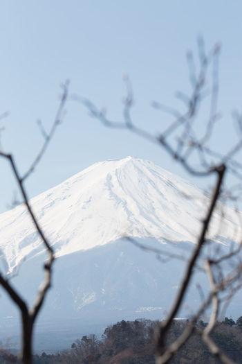 Fuji Cold