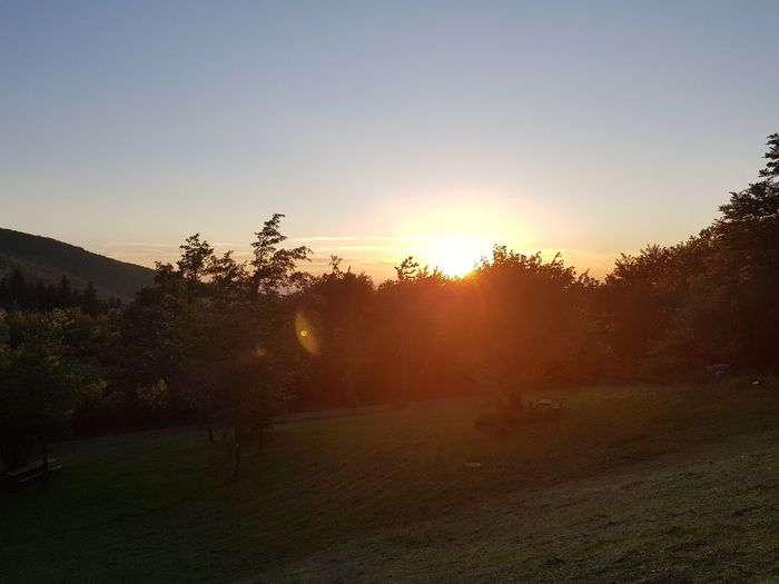 Tree Sunset Fog Rural Scene Agriculture Dawn Sunlight Morning Sun Sky