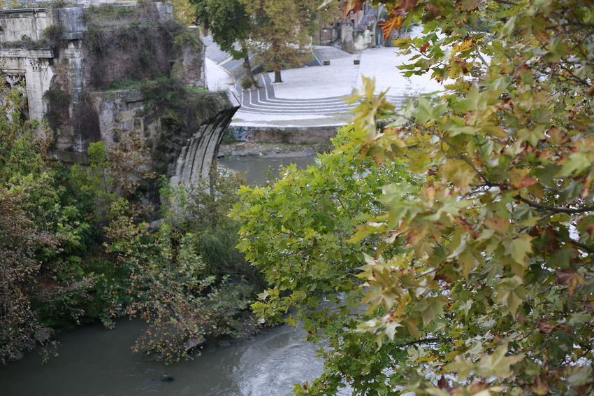 Antique Beauty In Nature Day Growth History I Love Rome Isola Itly Nature No People Outdoors Road Scary Storical Place Tiberias Tree Water What Else? When In Rome