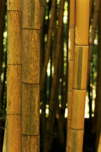 Close-up of bamboo tree trunk in the background