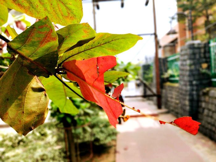 NATURR Tree Leaf Close-up Plant Architecture Blooming Autumn Mood