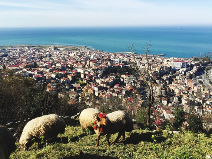 High angle view of sheep amidst buildings in city