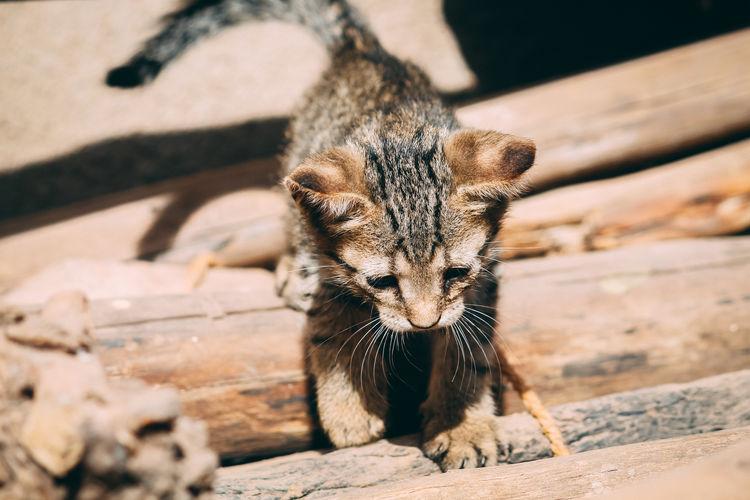Undomesticated Cat Stray Animal Kitten Cat Family Whisker Tabby Cat Cat Tortoiseshell Cat Ginger Cat Carnivora Captive Animals