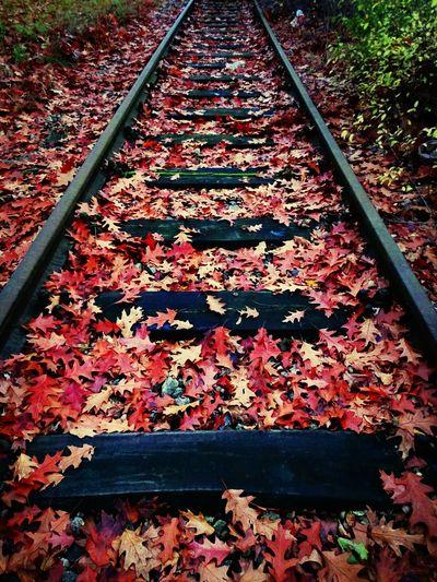 Taking Photos Photography Radev_photography Autumn Colors