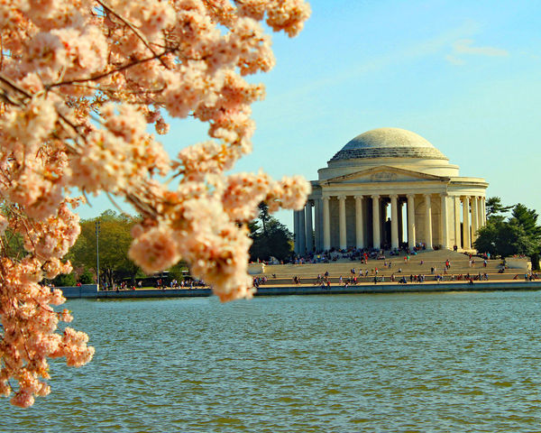 Spring Cherry Blossoms Cherry Blossoms Clear Sky Flower Petals Monuments Spring Flowers Springtime Travel Desinations Trees Washington DC