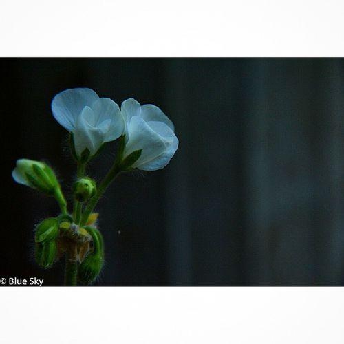 Spring2015 NikonD7100 NikorVR 18 ~300