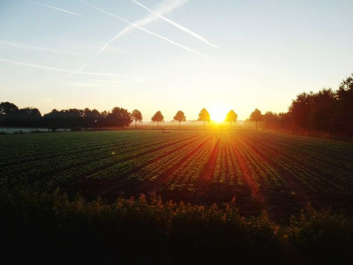 Earlybird for a very early forest walk at time of sunrise. Earlybird Sunrise Sun Sunlight Sunrise_Collection Dawn Dawn Of A New Day Earlymorning  Sunrisephotography Dutchlandscape Holland Roosendaal Farmer Agriculture Scenery Scenery Shots