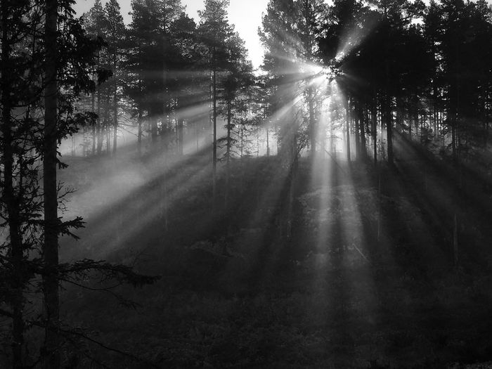 Sunrays in the morning fog... EyeEm Premium Collection IPhoneography Eyem Nature Lovers  Eyem Best Shots Sunrays Peace Nature Sunbeam No People Beauty In Nature Sunlight Hazy  Landscape Scenics EyeEmNewHere Komorebi Spiritual Tranquility Blackandwhite Black & White Tree Beauty In Nature Tranquility Tranquil Scene Nature Sunlight Outdoors Silhouette Forest Tranquility
