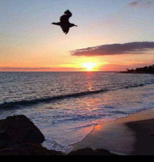 Sunset Santa Monica Ocean Beachphotography Seagull EyeEm Nature Lover California CaliLifeStyle Waves