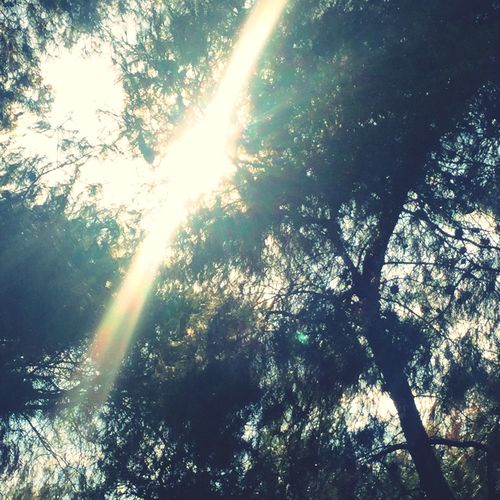 First Eyeem Photo Architecture Sunbeam Sunlight Nature Low Angle View Beauty In Nature Lens Flare Tree Sun Scenics Growth Tranquility Outdoors Streaming No People Day Tranquil Scene Sunrays Solar Flare Sky Shining