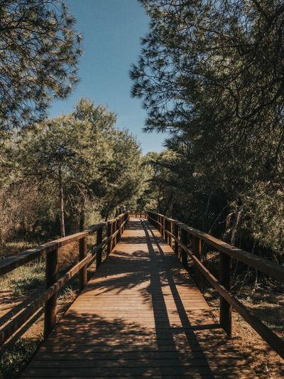 Wooden footbridge along trees and plants