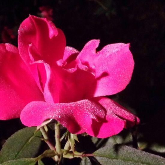 Flowerlovers Allnatural Nofilter#noedit Misting