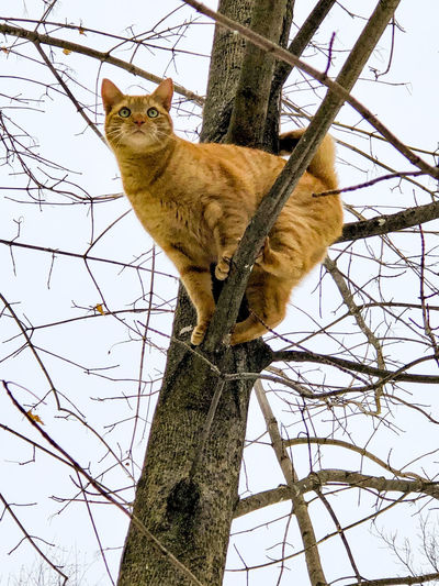Low angle view of a cat on tree