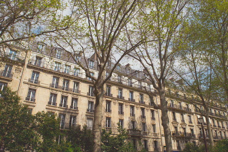 Classic Paris apartment in Springtime Building Exterior Low Angle View Built Structure Tree Architecture Building No People Sky Day Outdoors Paris, France  Europe Light And Shadow Springtime Façade History Apartment Old Leaves Park Balcony Window Iron Glass Shutter French Reflection City Clouds