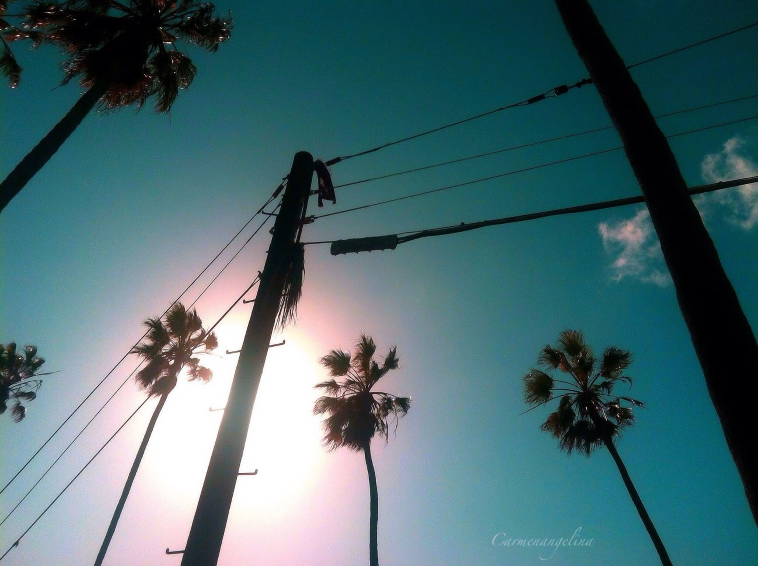 low angle view, palm tree, silhouette, tree, clear sky, power line, electricity pylon, connection, blue, sky, power supply, cable, tall - high, electricity, tree trunk, nature, technology, growth, outdoors, tranquility