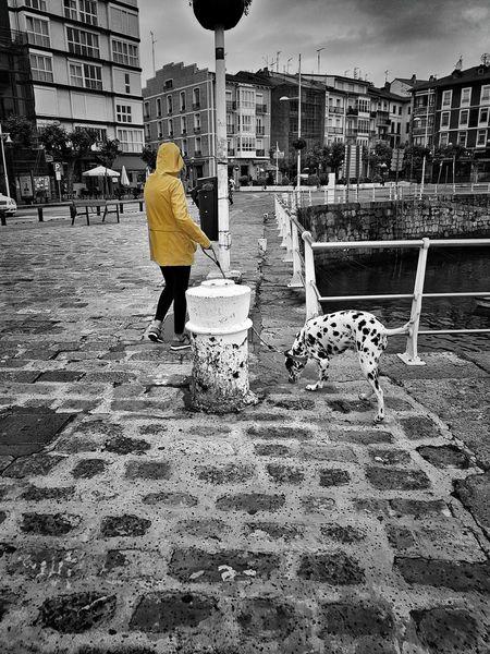 Castro Urdiales (Cantabria) Splash Of Color Women Dog Dalmata Splash Of Colour One Person Built Structure City Walking Rain