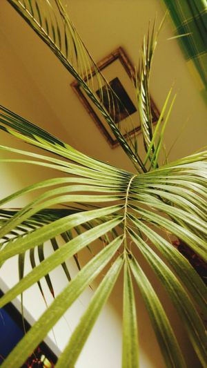 Editor Palm Tree EyeEm Home Indoors  2016 Showcase March Tadaa Community Htcphotography EyeEm Gallery EyeEmBestPics Getty Images Gettyimages