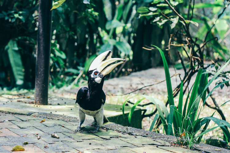 Hornbill perching on footpath by plant