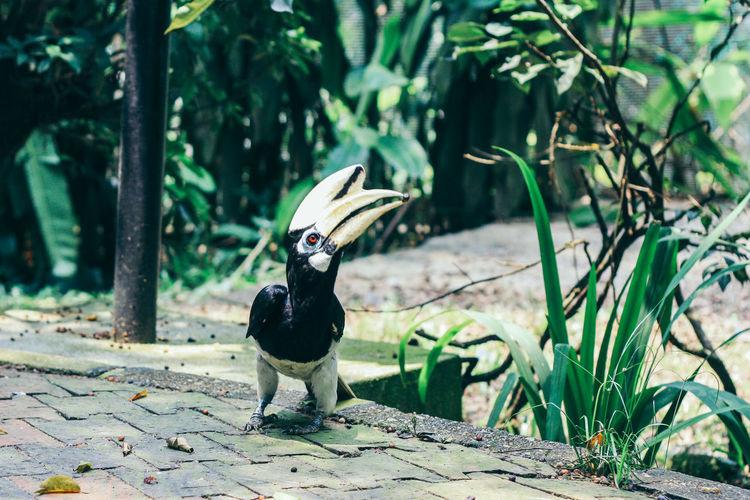 Animal Animal Themes Animal Wildlife Animals In The Wild Bird Day Mammal Nature No People One Animal Outdoors Pets