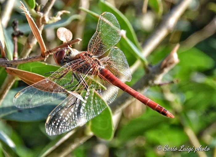 Dragonfly Dragonfly Beauty In Nature Macro Photography Macroinsect Leaf Insect Close-up Animal Themes Green Color