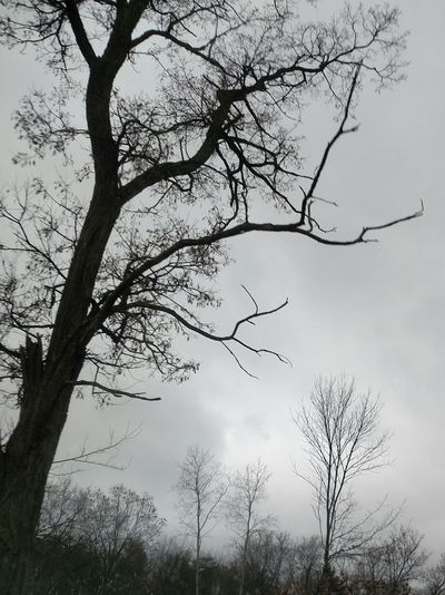 From My Point Of View In The Car Todays Weather Report Todays Weather☁☔ Dark And Dreary The Purist (no Edit, No Filter) Tree And Sky Bare Tree Bare Branches Tree Silhouette Tree_collection  Drive By Shooting Drive By Photography Drive By Shot From My Car Window
