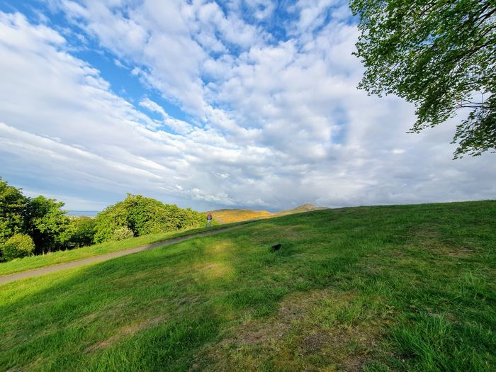 Blue Sky And White Clouds Treetop Green Grass Green Grass And Trees Panorama View Wide Open Spaces Park - Man Made Space Tree Field Sky Grass Landscape Cloud - Sky Green Color