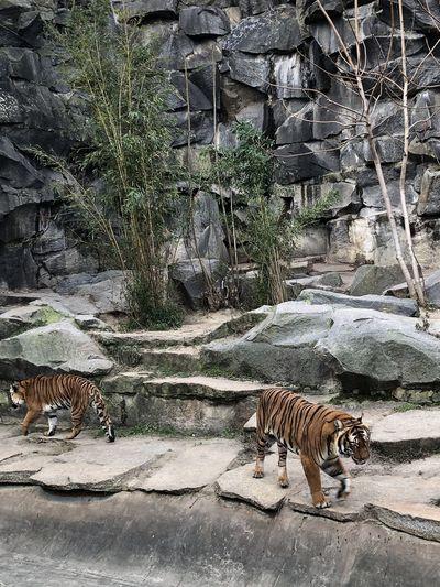 Cat walking in zoo