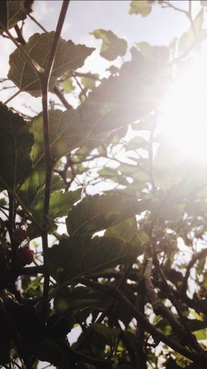 this morning the sun light is beautiful🌞 Plant Growth Tree Nature Sunlight Leaf Day Beauty In Nature Green Color Outdoors First Eyeem Photo