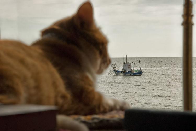 Cat looking at sea