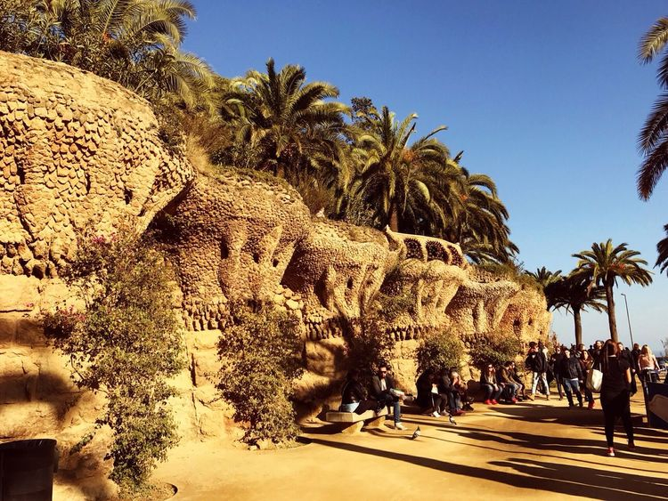 Park Güell, Barcelona Palm Tree Travel Destinations Architecture EyeEm Gallery Turistic Places Beutiful Day Vacations Photography Time Barcelona, Spain Exelentday!