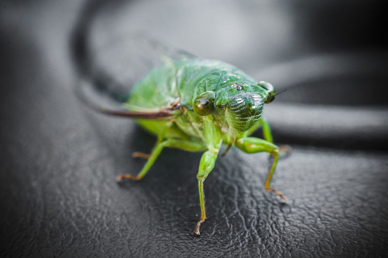 Close-up of insect on leather