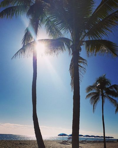 Scenic view of palm trees on beach during sunny day
