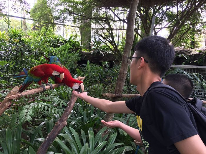 Feeding the macaws Parrot Macaw Macaw Parrot Real People Feeding The Birds People Rear View Branch Outdoors The Purist (no Edit, No Filter) Botanical Garden Birds