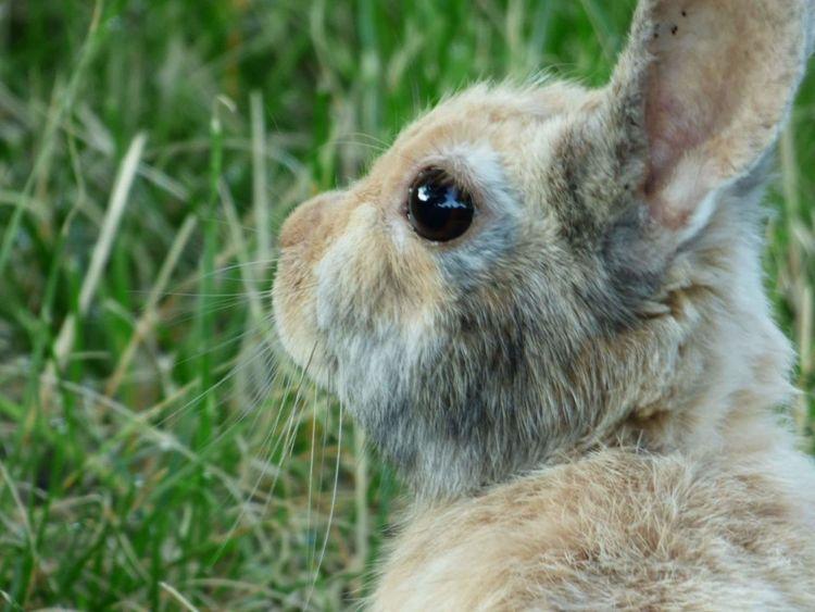 One Animal Animal Wildlife Rabbit Portrait