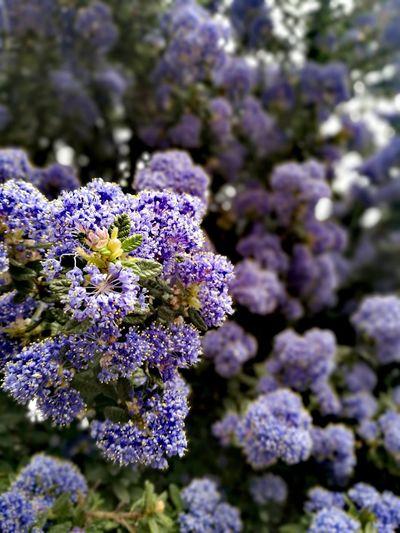 Springtime Fioletowy Violet Flowers Close-up Nature Botany Fragility No People