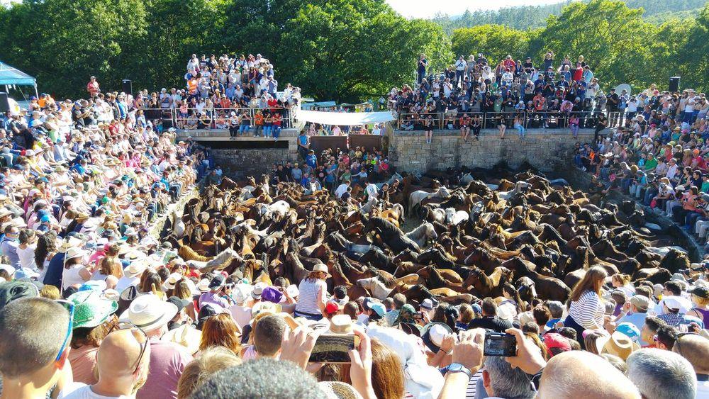 Rapa Das Bestas Sabucedo Galicia, Spain Fiesta Tradition Traditional Culture Pontevedra Galicia,España