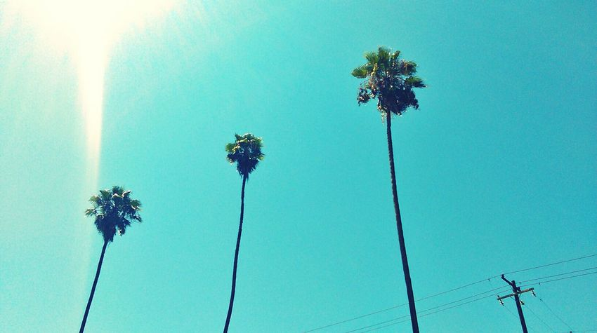 California Palm Trees Skate Boarding  Skatelife Nature Photography EyeEm Nature Lover Sky And Clouds