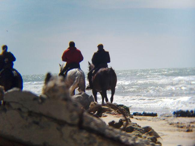 Animal Themes Domestic Animals Beach Sea