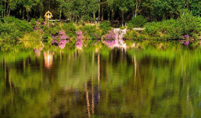 Reflection Plant Water Lake Beauty In Nature Growth Reflection Flower Tree Nature Flowering Plant Green Color No People Freshness Tranquility Waterfront Day Outdoors Scenics - Nature Purple Ornamental Garden
