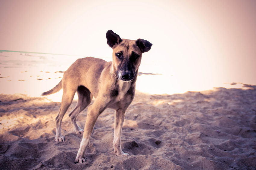 Animal Animal Themes Day Dog Dog Photography EyeEm Best Shots Eyeem Dog World OFFICIAL Photos Club 🐶🌍😄👍 I Love My Dogs One Animal Running Dogs On The Beach Dog Are Fun Funy Dogs Pet Portraits