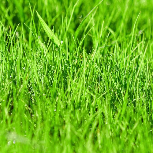 Full frame shot of dew on grass