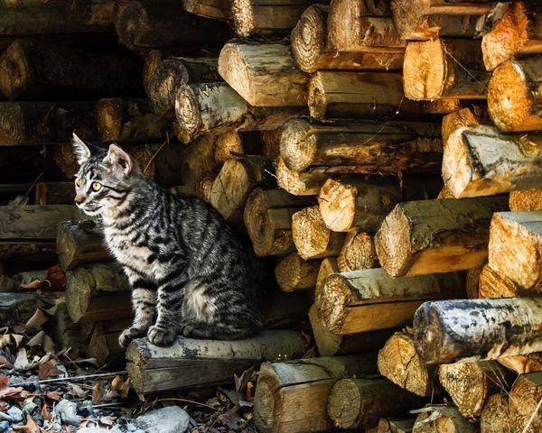 Outdoorcat Timber ForestPark Taleghaniforestpark Tehran, Iran Composition Shapes And Patterns  Canon7d
