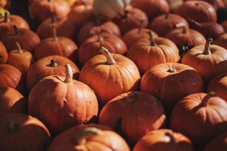 Abundance Autumn Backgrounds Close-up Crop  Food Freshness Full Frame Halloween Halloween Halloween Halloween Halloween Pumpkins Healthy Eating Large Group Of Objects No People Orange Color Pumpkin Pumpkins Vegetable Vegetarian Food