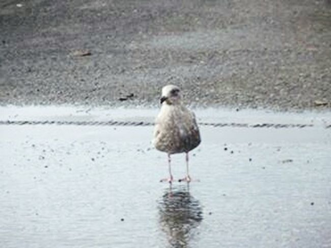 Taking Photos Ocean Bird Relaxing Check This Out