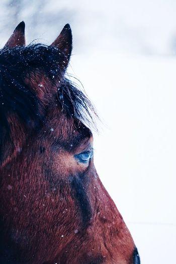 One Person Close-up Mammal Domestic Domestic Animals One Animal Pets Eye Animal Body Part Headshot Digital Composite Vertebrate